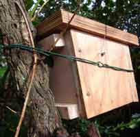 Dormouse Box