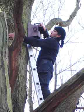 Installation of Nest Boxes